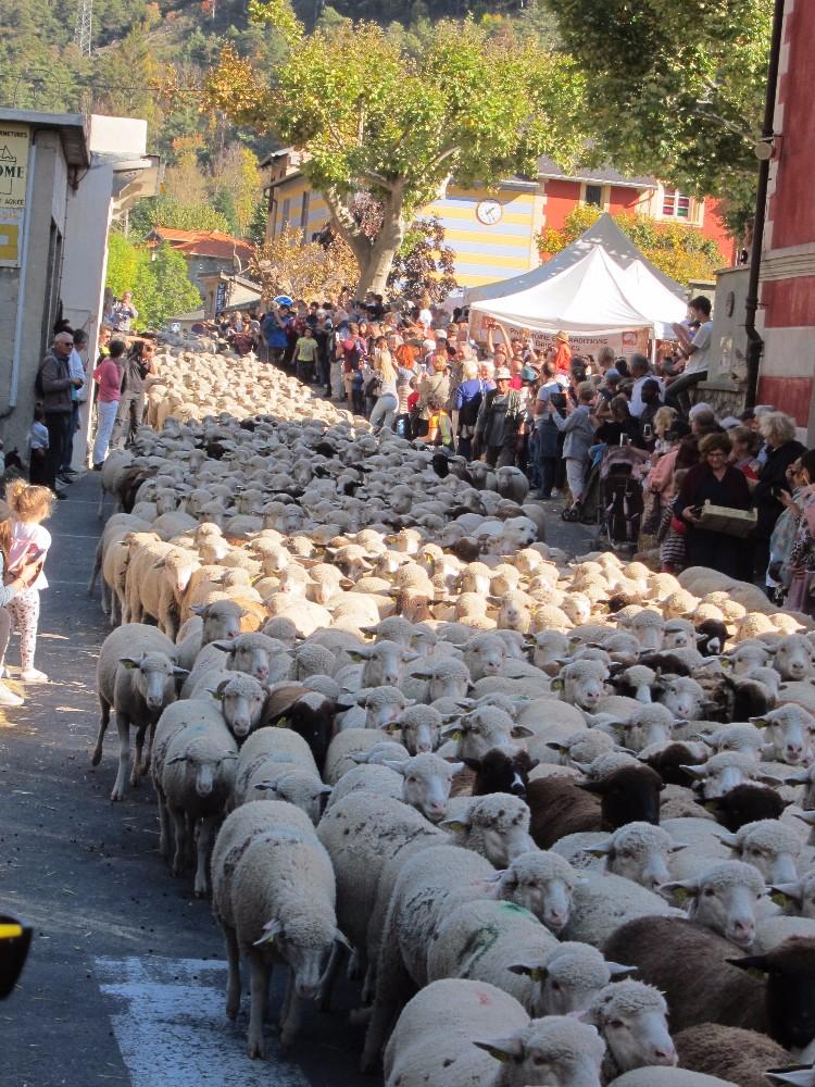 Des moutons, pas de béron